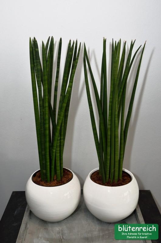 Bl tenreich kreative floristik kaarst pflanzen for Pflanzen drinnen
