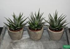 Pflanzen_bluetenreich_09
