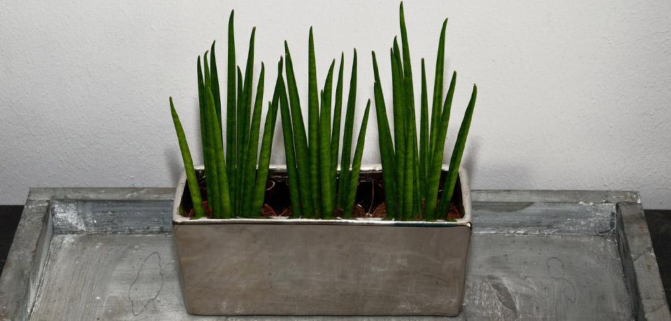 Pflanzen_bluetenreich_1
